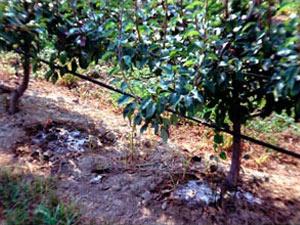 Impianti di irrigazione a padova e provincia canesso for Irrigazione vigneto